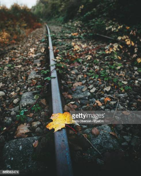 High Angle View Of Autumn Leaf On Railroad Track