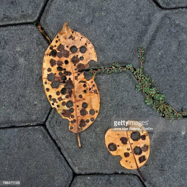 High Angle View Of Autumn Leaf On Sidewalk