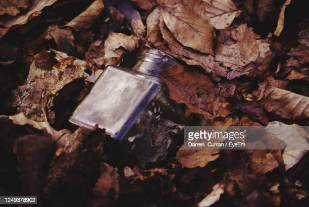 high angle view of autumn leaves on tree and a glass jar - curran stock pictures, royalty-free photos & images