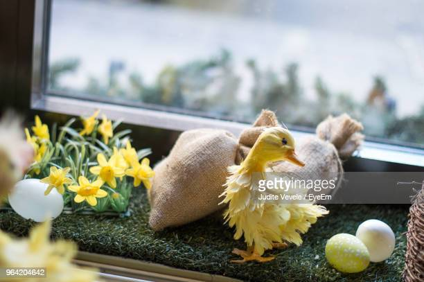 High Angle View Of Baby Chicken With Eggs On Window Sill