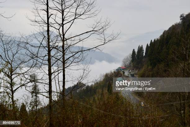 High Angle View Of Bare Trees Against Mountains During Foggy Weather