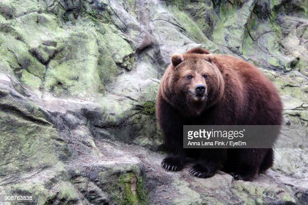 High Angle View Of Bear In Forest