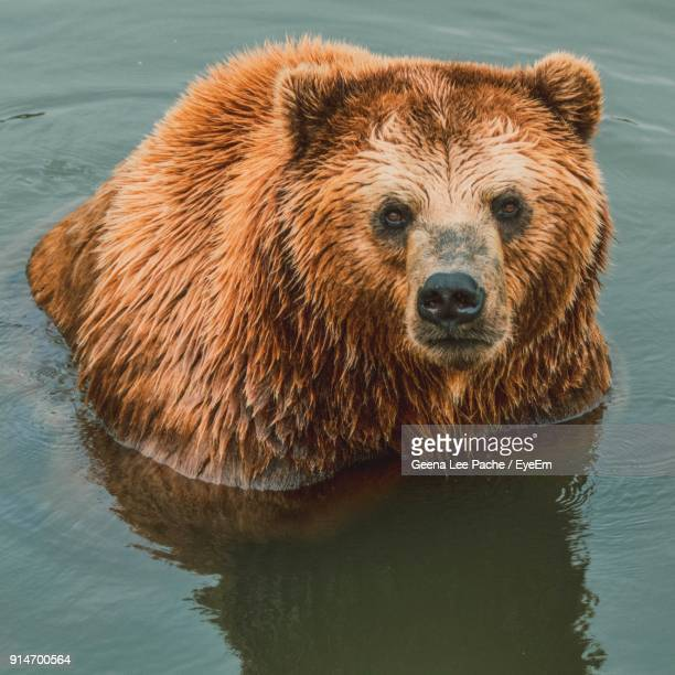 High Angle View Of Bear In Lake