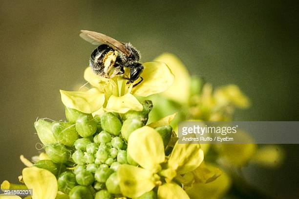 high angle view of bee on yellow flowers blooming outdoors - andres ruffo stock-fotos und bilder