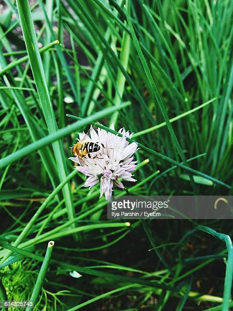 High Angle View Of Bee Pollinating On Pink Flower