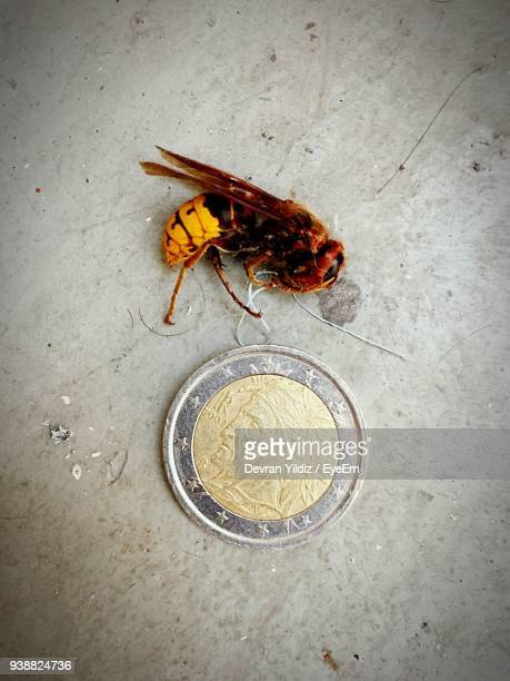 High Angle View Of Bee With Coin On Floor