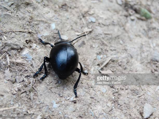 High Angle View Of Beetle Outdoors