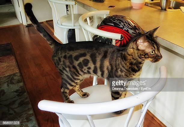 High Angle View Of Bengal Cat Standing On Chair Indoors