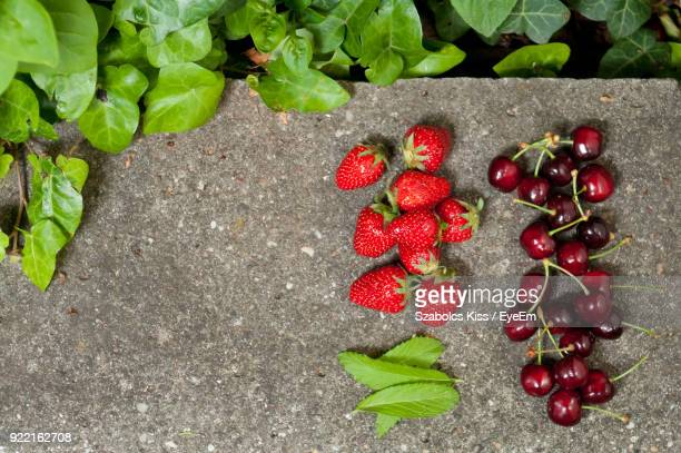 high angle view of berries on ground by plant - cherry kiss photos et images de collection