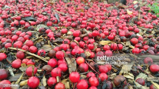 high angle view of berries on ground - mulch stock pictures, royalty-free photos & images
