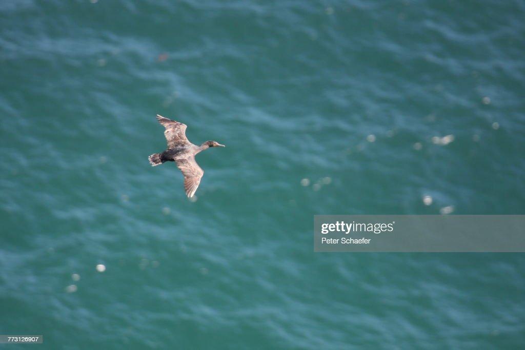 High Angle View Of Bird Flying Over Sea : Photo
