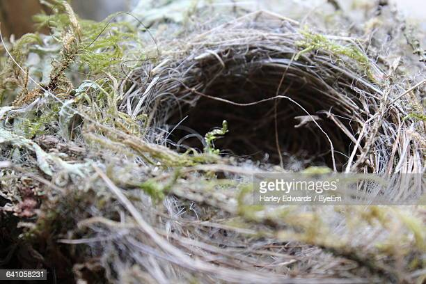 high angle view of bird nest - harley bird stock pictures, royalty-free photos & images