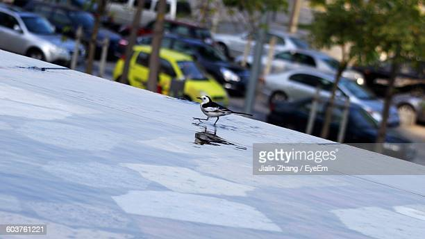 High Angle View Of Bird On Wet Floor