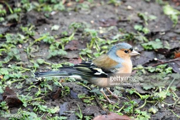 high angle view of bird perching on a field - stockton on tees stock pictures, royalty-free photos & images