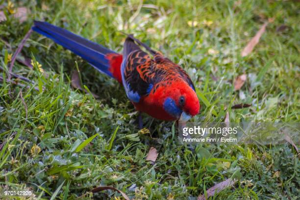 High Angle View Of Bird Perching On Grassy Field