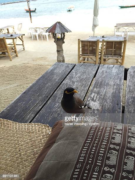 High Angle View Of Bird Perching On Pillow At Tourist Resort