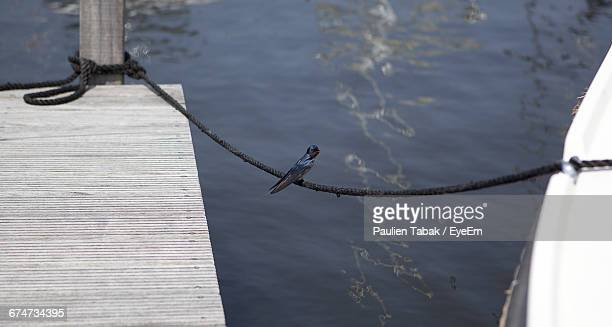 High Angle View Of Bird Perching On Rope Tied To Boat And Wooden Post Over Lake