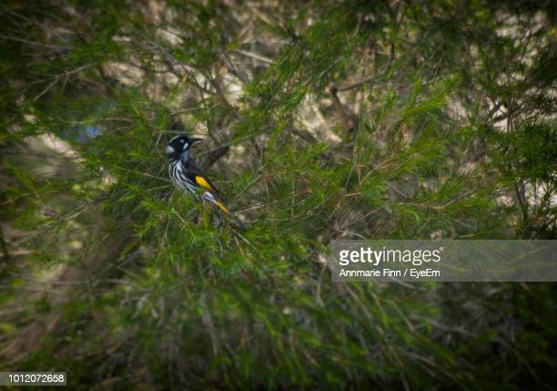 High Angle View Of Bird Perching On Tree