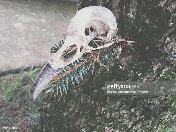 High Angle View Of Bird Skull On Tree Trunk