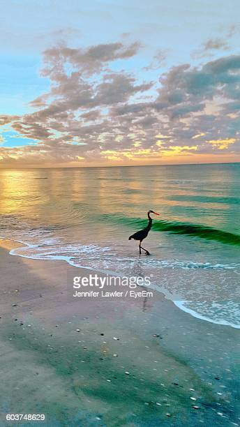 High Angle View Of Bird Walking On Shore Against Sky During Sunset