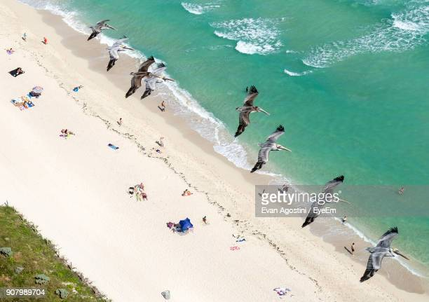 high angle view of birds flying over sea - evan agostini stock pictures, royalty-free photos & images