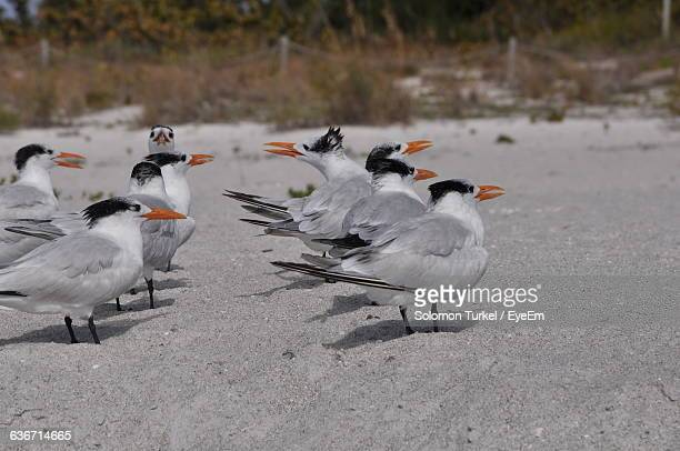 high angle view of birds on sand - solomon turkel stock pictures, royalty-free photos & images