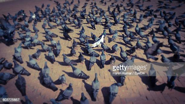 High Angle View Of Birds On Street
