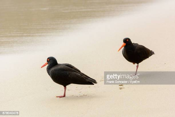 High Angle View Of Birds Perching At Beach