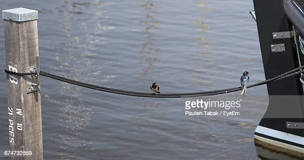 High Angle View Of Birds Perching On Rope Tied To Boat And Wooden Post Over Lake