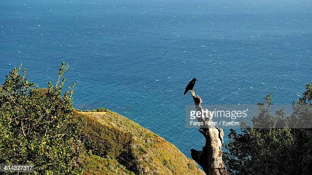 High Angle View Of Black Bird Perching On Wood Over Sea