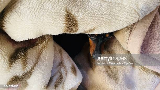 high angle view of black dog sleeping on bed - koukichi stock pictures, royalty-free photos & images
