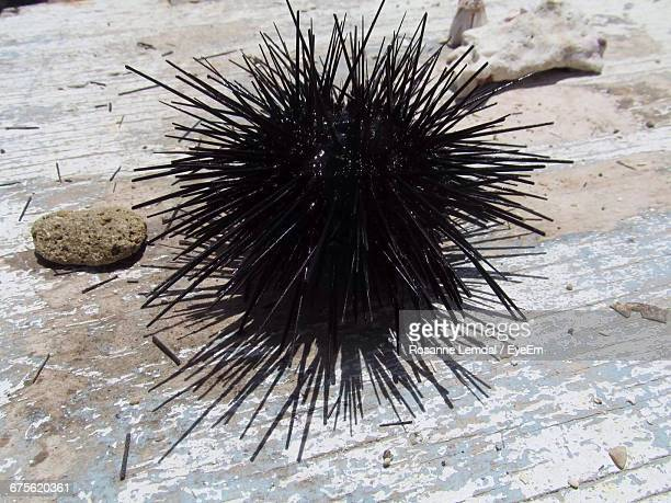 high angle view of black sea urchin on table - sea urchin stock pictures, royalty-free photos & images
