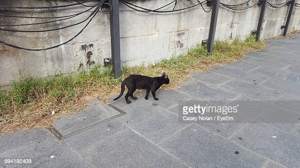 high angle view of black stray cat walking on footpath against wall - casey nolan stock pictures, royalty-free photos & images