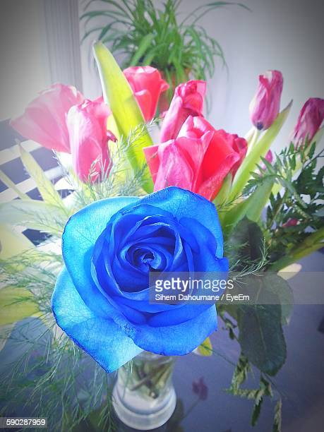 High Angle View Of Blue Rose In Vase