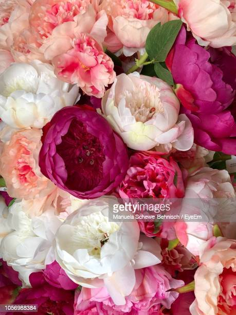 high angle view of bouquet - peony stock pictures, royalty-free photos & images