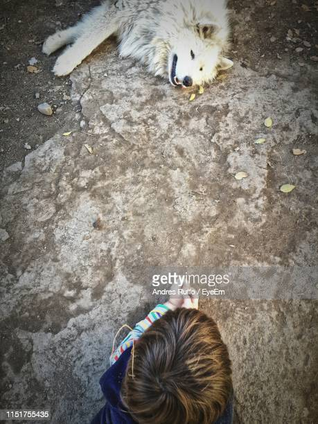 high angle view of boy and dog lying on land - andres ruffo stock pictures, royalty-free photos & images