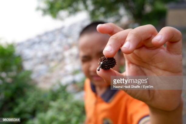 High Angle View Of Boy Holding Pine Cone