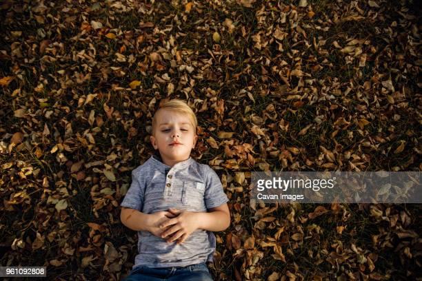 high angle view of boy lying on fallen autumn leaves at park - handen op de buik stockfoto's en -beelden