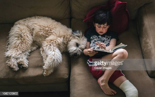 high angle view of boy with fractured leg reading book while lying by dog on sofa at home - gipsbein stock-fotos und bilder