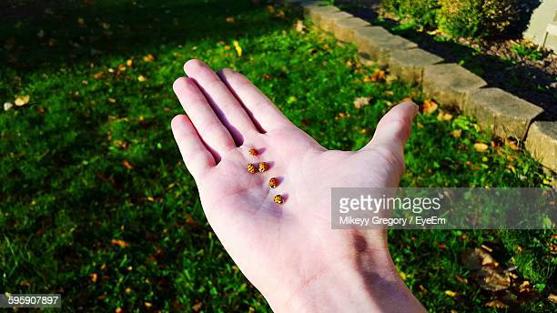 High Angle View Of Bugs On Hand At Park