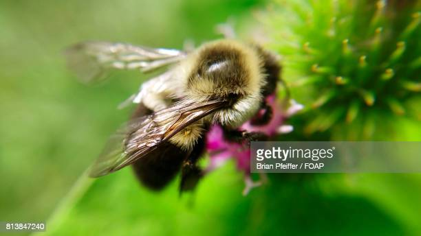 High angle view of bumblebee
