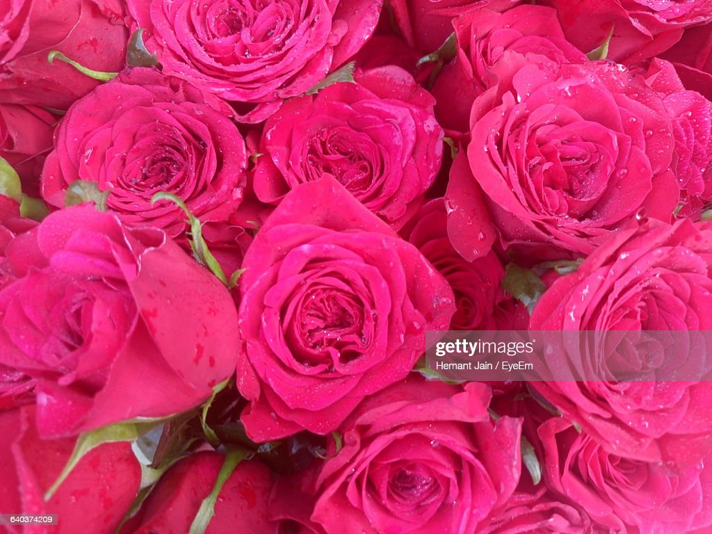 High Angle View Of Bunch Of Pink Rose Flowers Stock Photo Getty Images