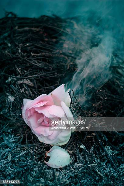 High Angle View Of Burning Rose On Field