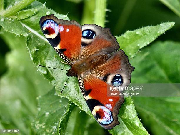 High Angle View Of Butterfly On Leaf