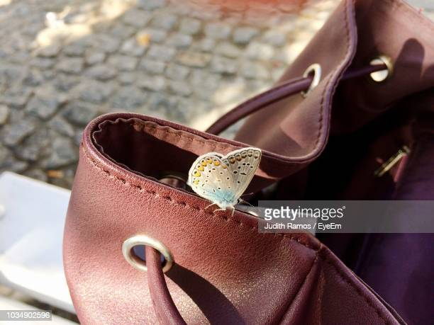 high angle view of butterfly on leather bag - brown purse stock pictures, royalty-free photos & images