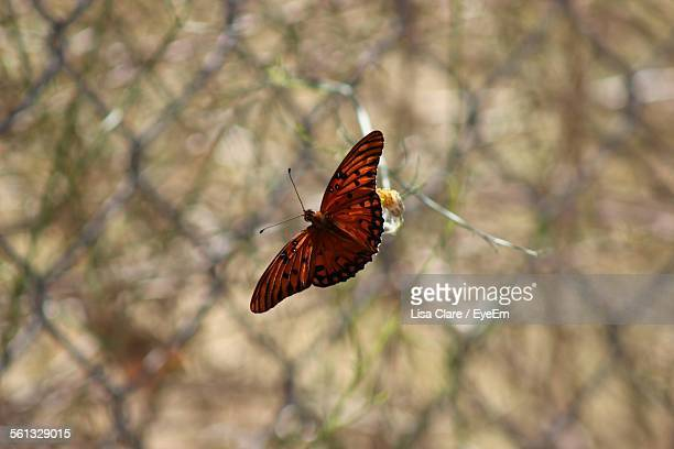 High Angle View Of Butterfly On Plant