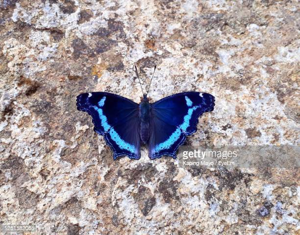 high angle view of butterfly on rock - spread wings stock pictures, royalty-free photos & images