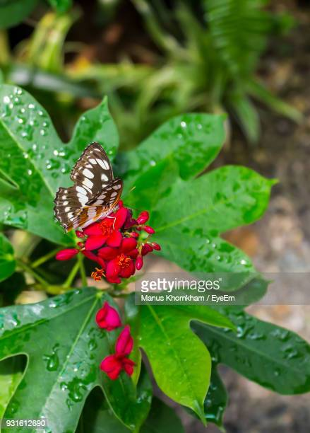 High Angle View Of Butterfly Pollinating On Red Flowers