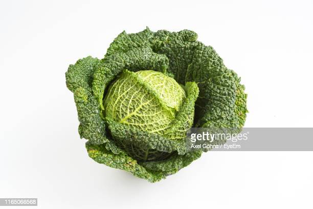 high angle view of cabbage on white background - cabbage stock pictures, royalty-free photos & images