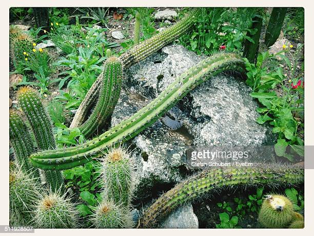 high angle view of cactus growing in park - erlangen stock photos and pictures